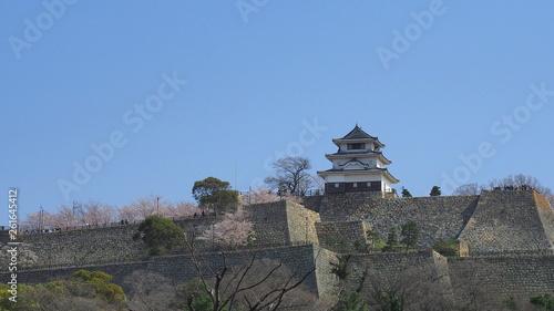 春の丸亀城(桜満開)1 © 泰行 川井