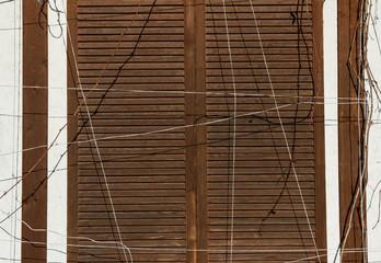 wooden background © Viktor
