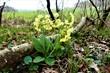 canvas print picture - Natur - Blüten - Frühling - aufblühen
