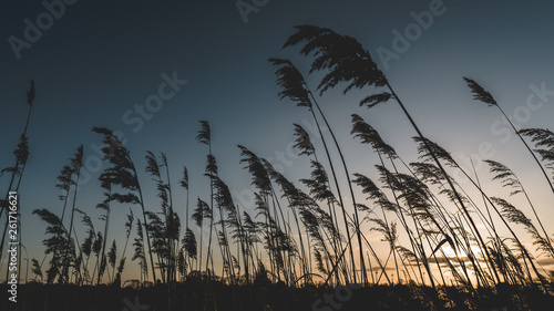 canvas print picture nature sunset