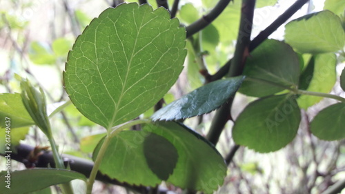 canvas print picture Green Magic Leafs