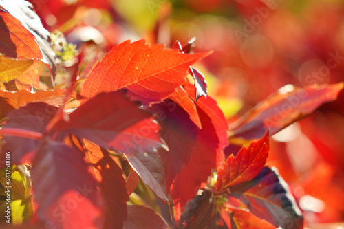 Autumn colors closeup - 261750806