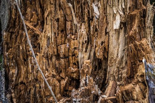 Textur Holz eines abgebrochenen Baumstamm im Wald © RGMfotografie