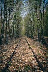 Alte Bahnschienen im Wald