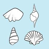 Seashell summer vector illustration  - 261790258