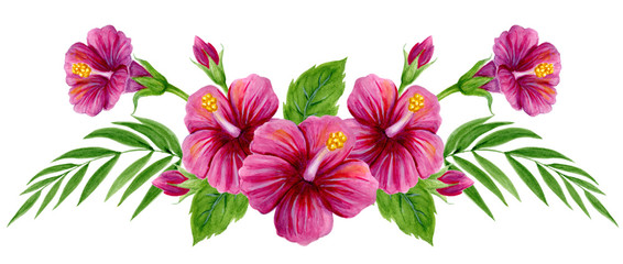 Hand drawn watercolor painting  with pink Chinese Hibiscus rose flowers isolated on white background © Marisha