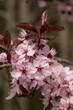 canvas print picture - Blüten auf der Streuobstwiese