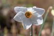 canvas print picture - Weisse Blüte mit Regentropfen