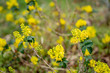 canvas print picture - Frühling Blüten auf dem Land