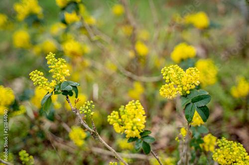 canvas print picture Frühling Blüten auf dem Land
