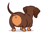 Cute dachshund dog vector cartoon illustration isolated on white. Simple  drawing of chocolate and tan wiener sausage puppy, rear view. Funny doxie butt, dog lovers, pets, animals theme.