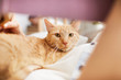 Warm toned portrait of ginger cat looking at camera while laying in bed, copy space