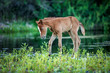 baby foal in the wild - 261880046