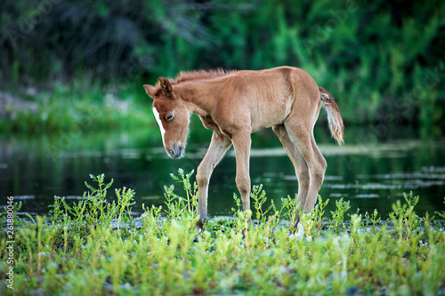 baby foal in the wild