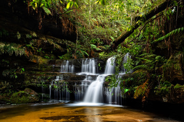 Blue Mountains Waterfalls in lush gully