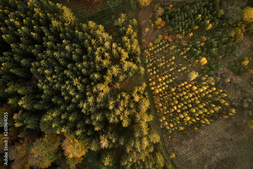 Trees in nursery at the forest from above
