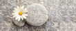 Quadro Stone and pebble panoramic background with a daisy