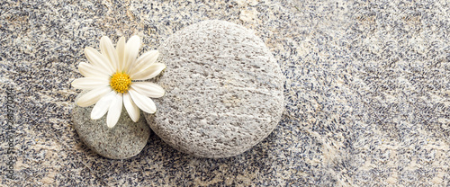 Stone and pebble panoramic background with a daisy - 261970214