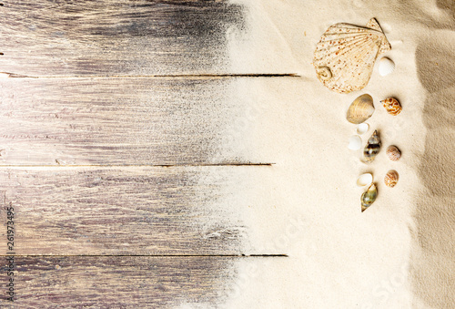 Top view of shells on the sand - 261973495