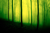 Vivid yellow green colored foggy forest