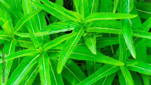 green abstract background - 262001032