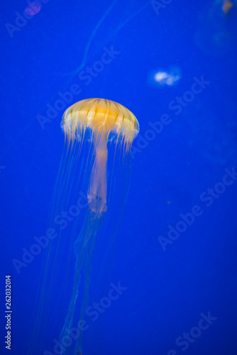 Leinwandbild Motiv Gold Jellyfish