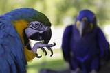 Parrots are a large group of birds