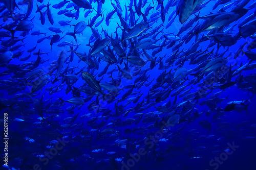Leinwandbild Motiv many Caranx underwater / large fish flock, underwater world, ocean ecological system