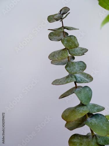 canvas print picture Zweig mit Blättern vor weißer Wand