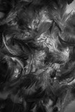 Beautiful colorful black and white feathers textures background and wallpaper art
