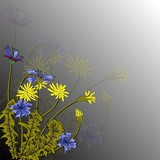 Vector illustration with beautiful field cornflowers and dandelions on a gray background. For decorating textiles, packaging and wallpaper.