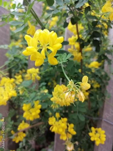 canvas print picture fleurs jaunes