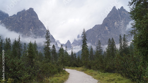 canvas print picture Forest Way in Austria