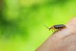 Quadro Firefly on a human hand