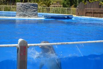 Delfines acrobáticos