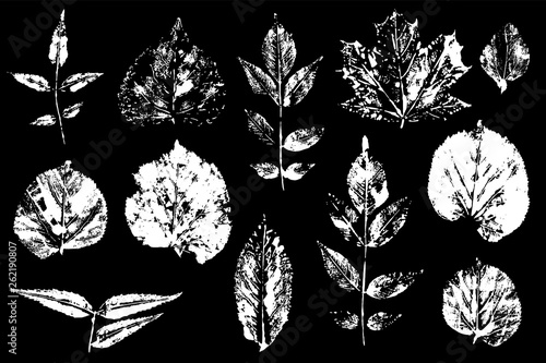 Leaves imprints set. Vector illustration