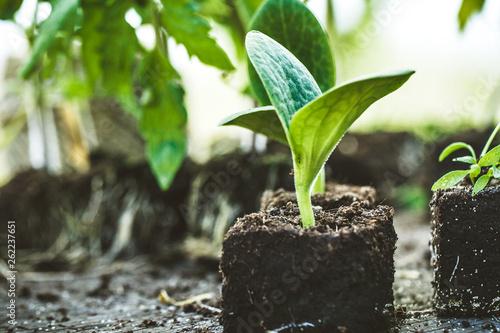 Garden seedlings on wood © mythja