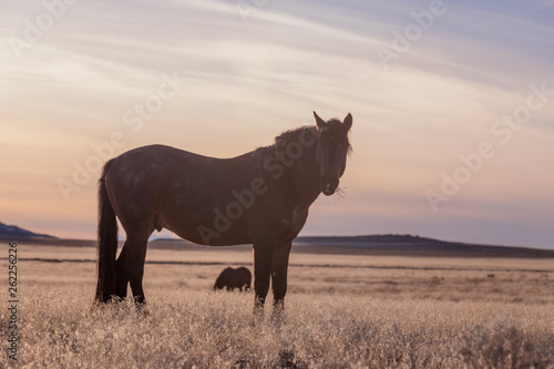 Wild Horse in the Utah Desert © natureguy