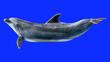 Leinwandbild Motiv Dolphin isolated on blue background