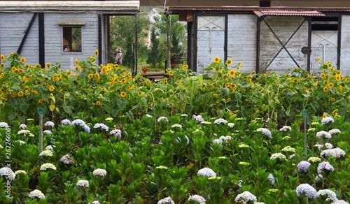 Jardin devant un wagon