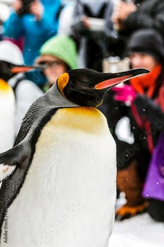 Fototapeten Pinguine Chow, the penguin Bird Parade at Asahikawa Zoo ,February 2019