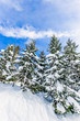 canvas print picture - Sky, twigs and snow in the winter on a bright blue day