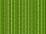 Horizontal seamless bamboo background. Vector illustration. Exotic green bamboo pattern with branches and leaves