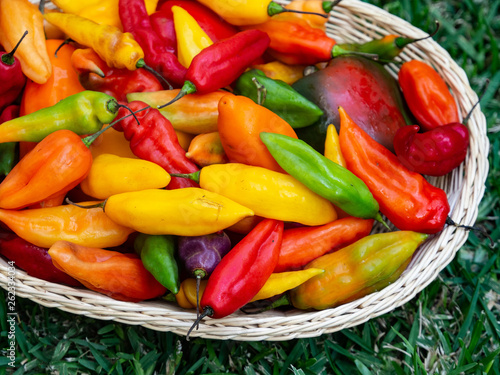 Peppers - 262334034