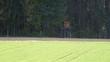 canvas print picture - Bäume Gras Waldweg Weg Wald