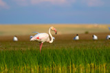 Colorful bird Flamingo. Colorful nature background.