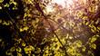 canvas print picture - Frühling im Wald mit Sonnenstrahlen