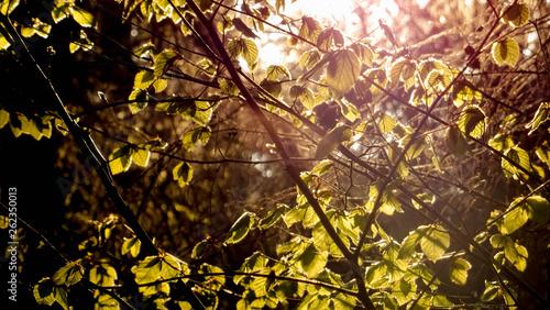 canvas print picture Frühling im Wald mit Sonnenstrahlen