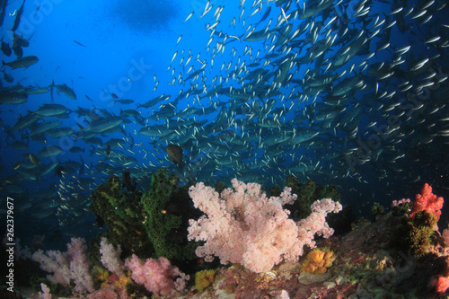 Underwater coral reef and fish in Indian Ocean