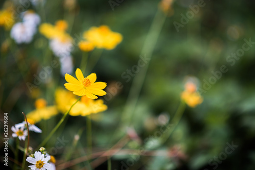canvas print picture little yellow flower in the forest